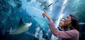 Aquarium at Pier 39